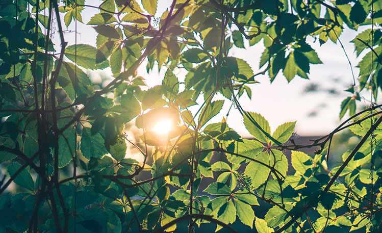 Plante vivace ensoleillé